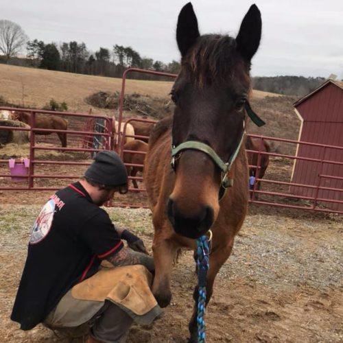 rvhr com – Roanoke Valley Horse Rescue, Inc